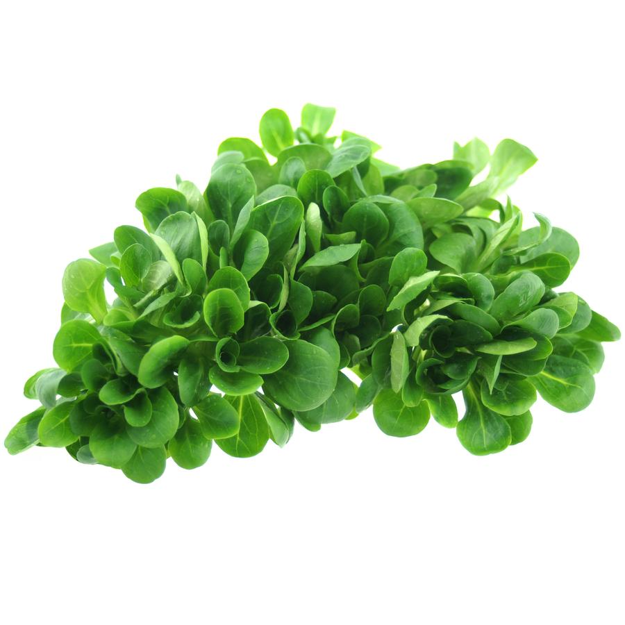 Nüsslisalat (ungewaschen) 1 Schale